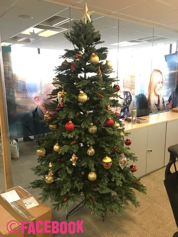 This Morning Office Put Their Christmas Tree Up